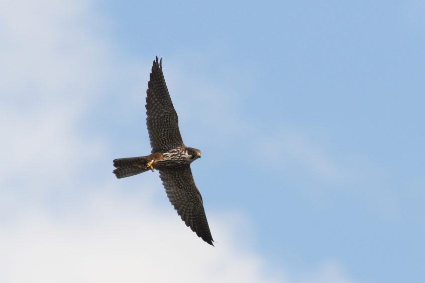 Hobby, Undisclosed site, 10/09/2019 (Dave Harris)