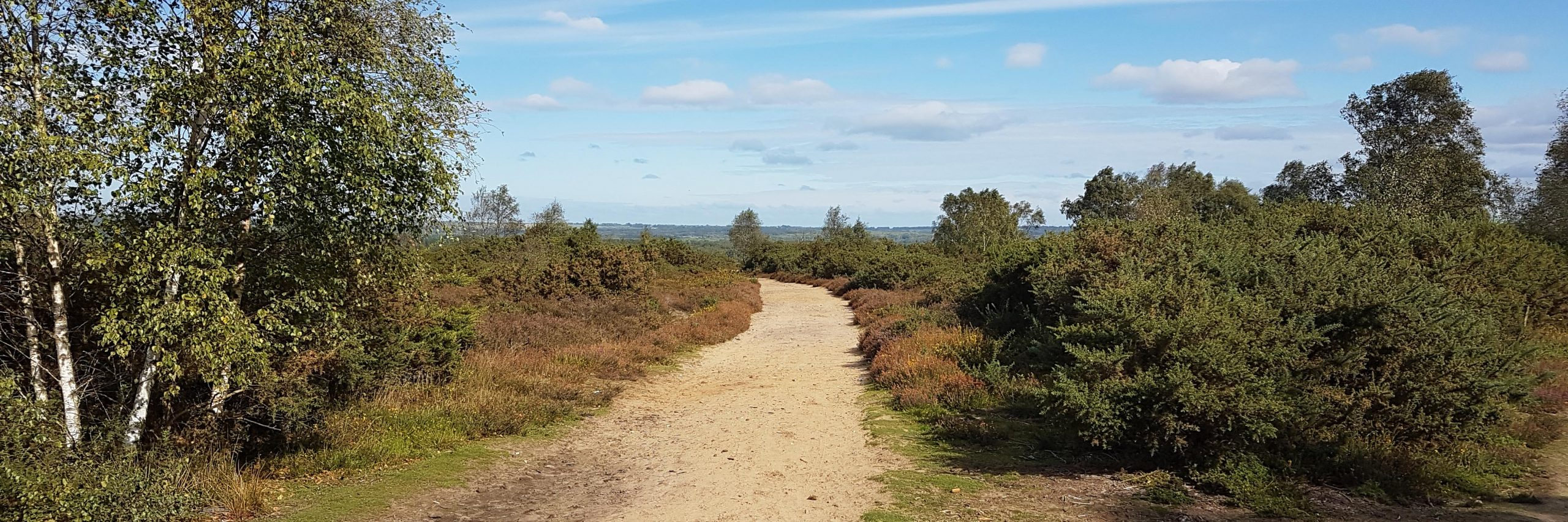 Chobham Common (P Williams)
